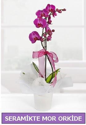 Seramik içerisinde birinci kalite tek dallı mor orkide  Malatya ucuz çiçek gönder