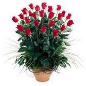Malatya kaliteli taze ve ucuz çiçekler  10 adet kirmizi gül cam yada mika vazo