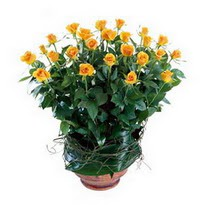 Malatya çiçek mağazası , çiçekçi adresleri  10 adet sari gül tanzim cam yada mika vazoda çiçek