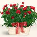 Malatya ucuz çiçek gönder  11 adet kirmizi gül sepette