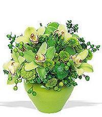 cam yada mika vazoda 5 adet orkide   Malatya çiçek satışı