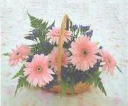 gerbera çiçeklerinde sepet   Malatya çiçekçi mağazası