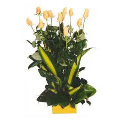 12 adet beyaz gül aranjmani  Malatya çiçek yolla