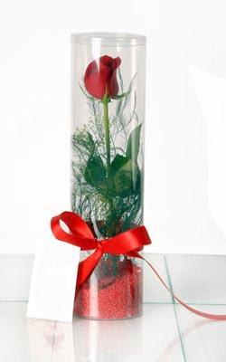 Malatya çiçekçi mağazası  Silindir vazoda tek kirmizi gül