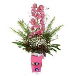 Malatya online çiçek gönderme sipariş  cam yada mika vazo içerisinde tek dal orkide çiçegi
