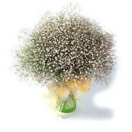 Malatya çiçek gönderme sitemiz güvenlidir  cam yada mika vazo içerisinde cipsofilya demeti