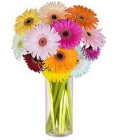 Malatya anneler günü çiçek yolla  Farkli renklerde 15 adet gerbera çiçegi
