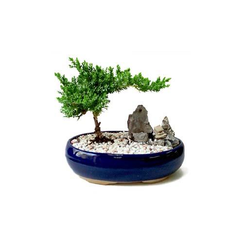 ithal bonsai saksi çiçegi  Malatya çiçek siparişi sitesi