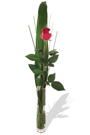 1 adet cam vazo içerisinde kirmizi gül  Malatya internetten çiçek siparişi