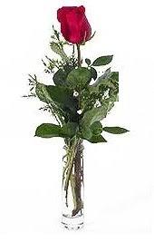 Vazo içerisinde 1 adet kirmizi gül  Malatya çiçek mağazası , çiçekçi adresleri