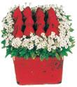 Malatya çiçek siparişi sitesi  Kare cam yada mika içinde kirmizi güller - anneler günü seçimi özel çiçek