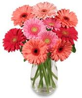vazo içerisinde 13 adet gerbera çiçeği  Malatya cicekciler , cicek siparisi