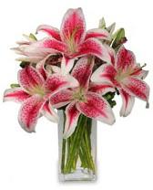 Vazo içerisinde 5 dal kazablanka çiçeği  Malatya çiçek mağazası , çiçekçi adresleri