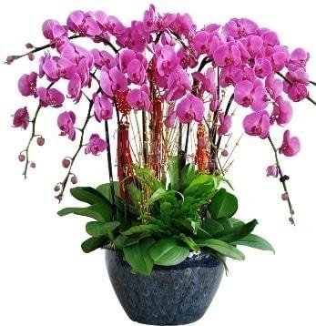 9 dallı mor orkide  Malatya güvenli kaliteli hızlı çiçek