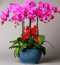7 dallı mor orkide  Malatya çiçek yolla , çiçek gönder , çiçekçi