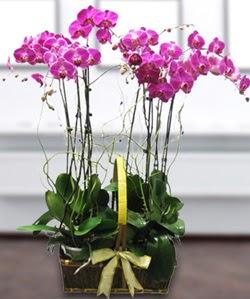 4 dallı mor orkide  Malatya çiçek gönderme