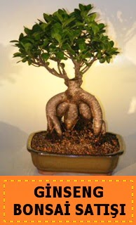 Ginseng bonsai satışı japon ağacı  Malatya çiçek servisi , çiçekçi adresleri