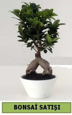 Bonsai japon ağacı satışı  Malatya İnternetten çiçek siparişi