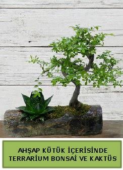 Ahşap kütük bonsai kaktüs teraryum  Malatya anneler günü çiçek yolla