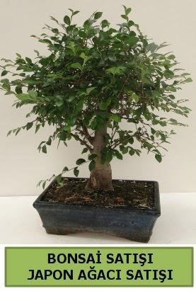 Minyatür bonsai japon ağacı satışı  Malatya hediye çiçek yolla