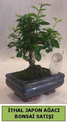 İthal japon ağacı bonsai bitkisi satışı  Malatya internetten çiçek satışı