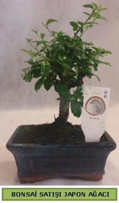 Minyatür bonsai ağacı satışı  Malatya çiçek siparişi sitesi