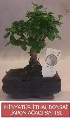 Küçük görsel bonsai japon ağacı bitkisi  Malatya internetten çiçek siparişi