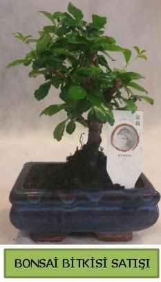 Bonsai ithal görsel minyatür japon ağacı  Malatya çiçek siparişi vermek