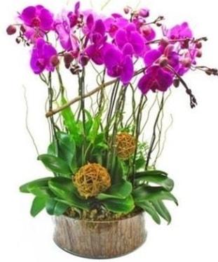 Ahşap kütükte lila mor orkide 8 li  Malatya uluslararası çiçek gönderme