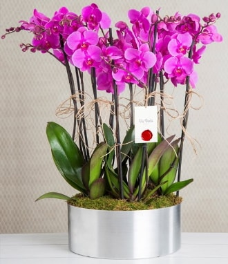 11 dallı mor orkide metal vazoda  Malatya hediye çiçek yolla