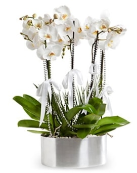 Beş dallı metal saksıda beyaz orkide  Malatya çiçekçi mağazası