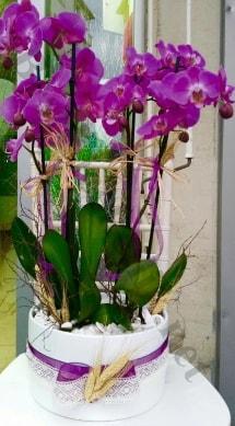 Seramik vazoda 4 dallı mor lila orkide  Malatya çiçek online çiçek siparişi