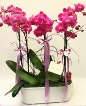 Beyaz seramik içerisinde 4 dallı orkide  Malatya çiçek siparişi vermek