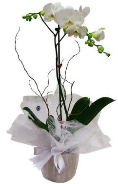 Tek dallı beyaz orkide  Malatya çiçek servisi , çiçekçi adresleri