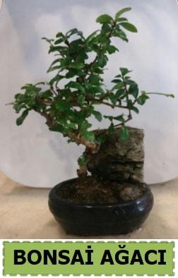 Bonsai ağacı japon ağacı satışı  Malatya online çiçek gönderme sipariş