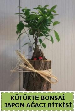 Kütük içerisinde doğal bonsai ağacı  Malatya internetten çiçek satışı