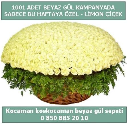 1001 adet beyaz gül sepeti özel kampanyada  Malatya hediye çiçek yolla