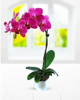 Tek dallı mor orkide  Malatya çiçekçiler