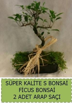 Ficus S Bonsai ve arap saçı  Malatya internetten çiçek satışı