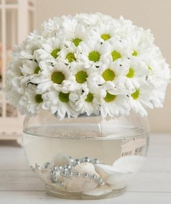 Fanusta beyaz Papatya  Malatya çiçekçiler