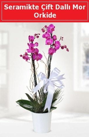 Seramikte Çift Dallı Mor Orkide  Malatya yurtiçi ve yurtdışı çiçek siparişi